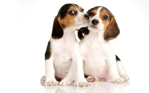 Dogs-dogs-32691642-1920-1200